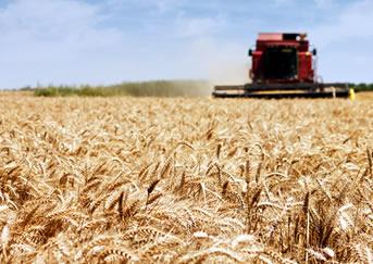 Trator plantação seguro agrícola