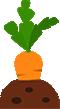 Hortifruti: Críticos, Tomate